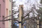 Pielęgnacja drzew na terenach Spółdzielni.